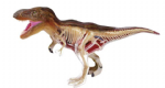 Revel A02091 T Rex Anatomical kit
